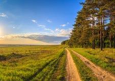 Paysage de ressort, la route entre la forêt de pin Photo libre de droits