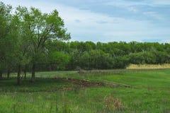 Paysage de ressort de nature de la Russie Atterrissage de forêt près de la rivière Herbe verte et route Accueil vers la Russie photos libres de droits