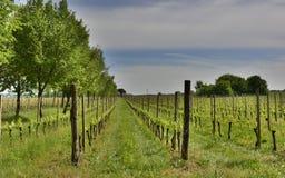 Paysage de ressort près de Cividale del Friuli Images libres de droits