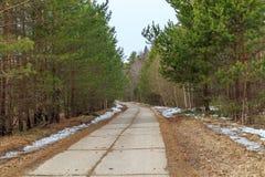 Paysage de ressort, route dans de jeunes pins Image stock