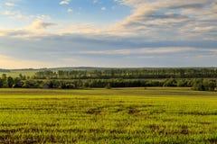 Paysage de ressort, un champ avec des jeunes plantes de blé Images libres de droits