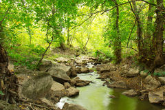 Paysage de rivière, de roches et d'arbres verts Image stock