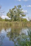 Paysage de rivière de ROS Images libres de droits