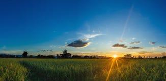 Paysage de rizière de coucher du soleil de lever de soleil beau image libre de droits