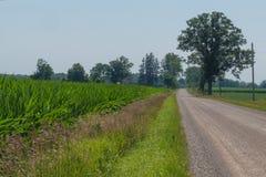 Paysage de route de campagne menant dans la photo avec le growi de maïs Photo libre de droits
