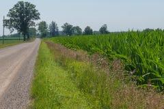 Paysage de route de campagne menant dans la photo avec le growi de maïs Images stock