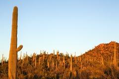 Paysage de Saguaro Photo libre de droits