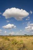 Paysage de Samburu photographie stock libre de droits