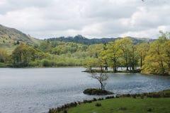Paysage de secteur de lac avec les arbres verts un jour nuageux Photo libre de droits