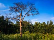 paysage de paysage de seul arbre de support sur le champ d'herbe photos stock