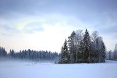 Paysage de soirée d'hiver avec le brouillard et les arbres givrés Photos libres de droits