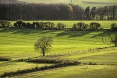 Paysage de soirée des champs au printemps avec le beau lighti latéral Photographie stock libre de droits