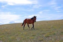 Paysage de steppe Photographie stock libre de droits