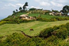 Paysage de Tansanian Image libre de droits