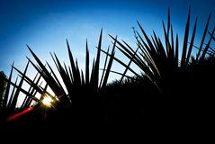 Paysage de tequila Photos libres de droits