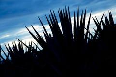 Paysage de tequila photo libre de droits