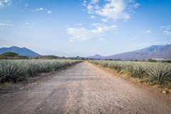 Paysage de tequila Photographie stock