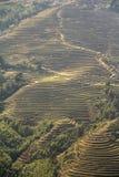 Paysage de terrasses de riz dans la PA de SA Photo libre de droits