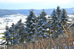Paysage de terre de merveille d'hiver avec des arbres Photographie stock libre de droits