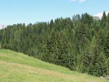 Paysage de terre de pâturage verte, d'arbres impeccables et des dolomites Le Tyrol du sud, Italie photo libre de droits