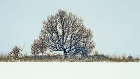 Paysage de thème de neige d'hiver avec un chêne antique puissant à une frontière photographie stock libre de droits