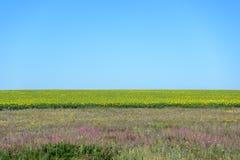 Paysage de tournesols d'été photo stock