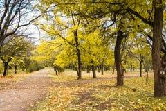 Paysage de traînée de parc d'automne Photos libres de droits