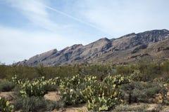 Paysage de Tucson Image libre de droits