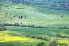 Paysage de Val d ?Orcia au printemps C?tes de la Toscane Cypr?s, collines, gisements jaunes de graine de colza et pr?s verts Val  photo stock