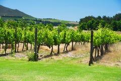 Paysage de vallée de vignoble de l'Afrique du Sud Images libres de droits