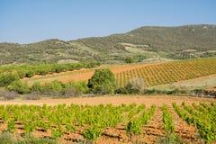 Paysage de vignoble au printemps image stock
