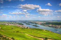 Paysage de vignoble avec le Rhin, Ruedesheim dans Hesse, Allemagne image stock