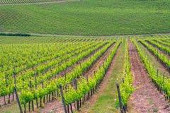 Paysage de vignoble de chianti en Toscane photo stock