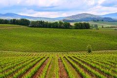 Paysage de vignoble de chianti en Toscane Photo libre de droits