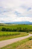 Paysage de vignoble de chianti en Toscane photographie stock libre de droits
