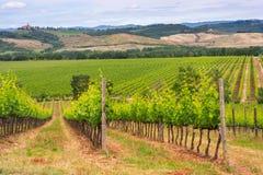Paysage de vignoble de chianti en Toscane photos libres de droits