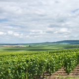 Paysage de vignoble, Montagne de Reims Photos stock