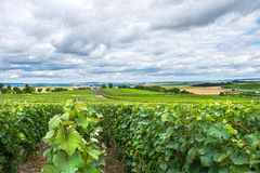 Paysage de vignoble, Montagne de Reims, France Photographie stock