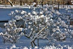 Paysage de ville d'hiver Photos libres de droits