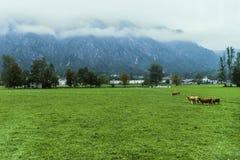 Paysage de ville de l'Autriche Salzkammergut Photos stock
