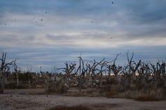 Paysage de ville fantôme d'Epecuen Photos libres de droits