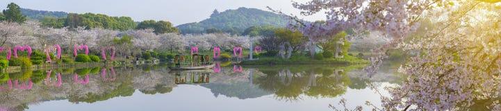 Paysage de Wuhan Cherry Blossom Garden au printemps photo stock