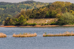 Paysage des arbres à feuilles persistantes sur le rivage photographie stock