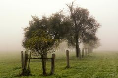 Paysage des arbres et du ciel Photos stock