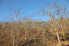 Paysage des arbres et du ciel Images libres de droits
