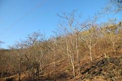 Paysage des arbres et du ciel Photographie stock