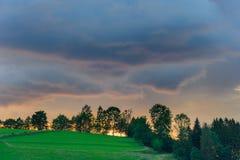 Paysage des arbres sur une colline verte Image libre de droits