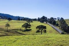 Paysage des champs verts près de Maleny Images stock