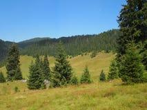 Paysage des montagnes d'Apuseni en Roumanie Photo stock