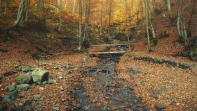 Paysage des montagnes de crique de forêt d'automne majestueux clips vidéos